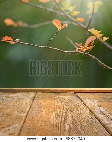 Spring or  autumn background Empty table for photomontage