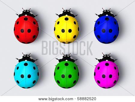 Colored Ladybugs
