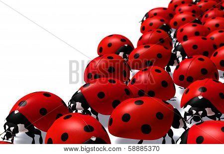 Group Of Ladybugs