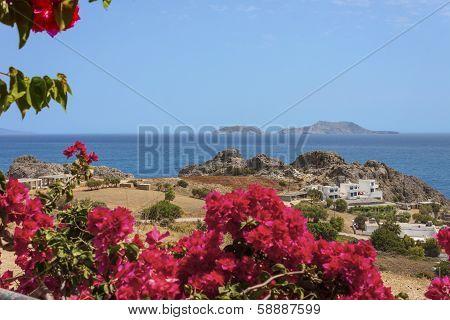 Red flowers of bougainvillea, Crete Island