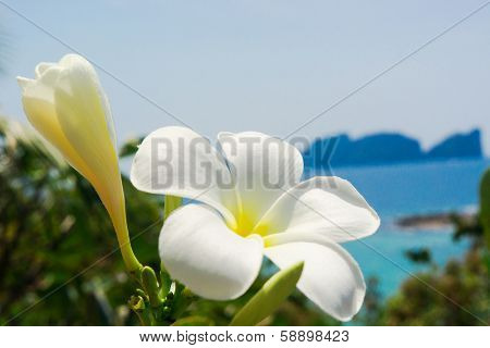 Tropical Verdure Exotic Paradise