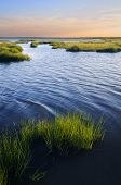 stock photo of marsh grass  - Late evening sun lighting salt marsh grasses along coastline - JPG