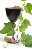 picture of red wine  - wine with grapevine - JPG