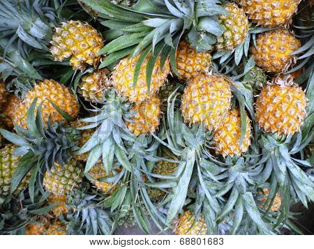 Ripe fresh honey pineapples