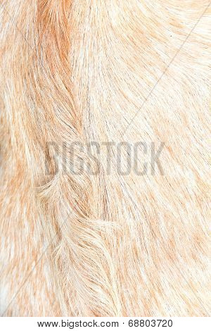 Animal fur texture,Close up of sheep wool.