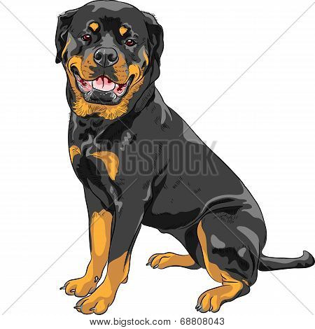 Vector Dog Rottweiler Breed