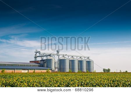 Grain Silos In Sunflower Field