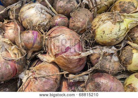 Onion Assortment