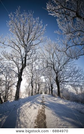 Winter Road And Landscape With Frosted Trees And Rime