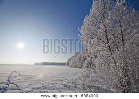 Winter  Landscape With Frosted Trees And Rime