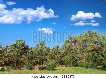 Palm Trees And Cumulus Clouds