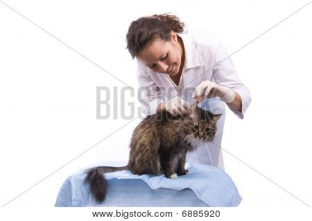 Vet Have A Medical Examination A Cat