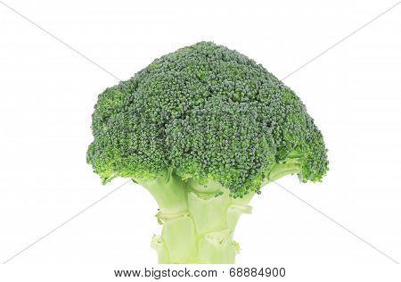 Fresh broccoli vegetable.