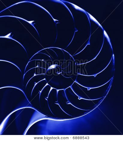 Nautilus en azul, close up