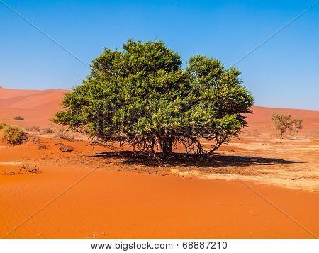 Lonesome Green Tree In The Desert