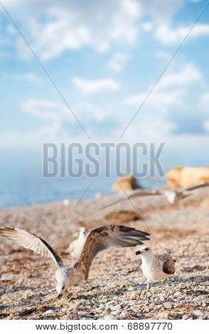 Seagulls on the beach. Focus on right bird. Shallow DOF.