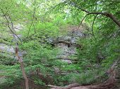 stock photo of starving  - Box Canyon with beautiful spring time tree growth at Starved Rock - JPG