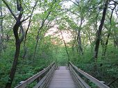 pic of starving  - Sun Starting to set along the River Bluff Trail at Starved Rock - JPG
