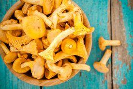 image of crimini mushroom  - organic fresh chanterelle mushrooms on a wooden background - JPG