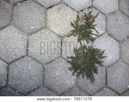 grass on paving