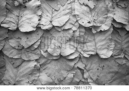 Lined Dry Leaves Wall Black White  Background Texture