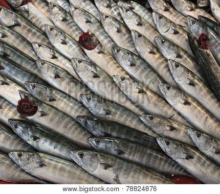 Baby tuna fish