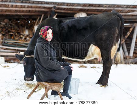 Farmer woman milking a cow in winter yard