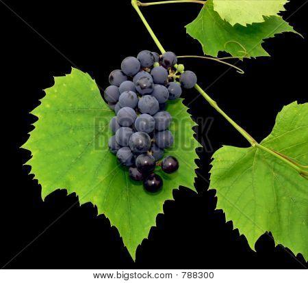 Black grape