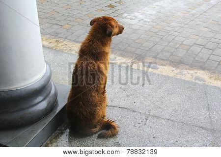 Dog waiting for the rain to stop