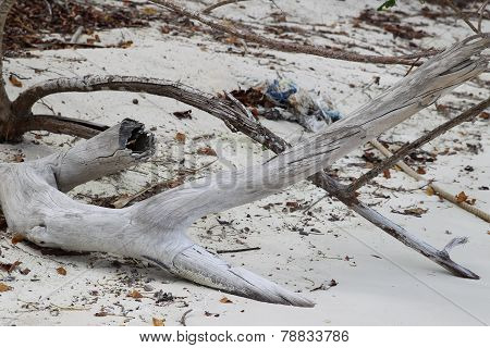 Snag On The Shore