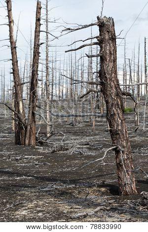 Lifeless Desert Landscape Of Kamchatka: Dead Wood (tolbachik Volcano Lava Field)