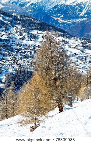 Larch on the background of a mountain village