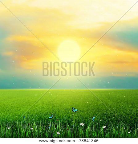 Sun Grass Flower And Butterflies