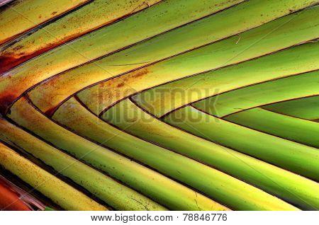 banana fan