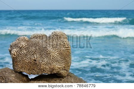 Dead coral against the sea