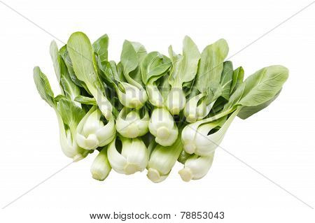 Fresh Green Bok Choi Isolated On White.