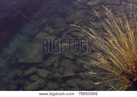 Dry Grass Above The Water