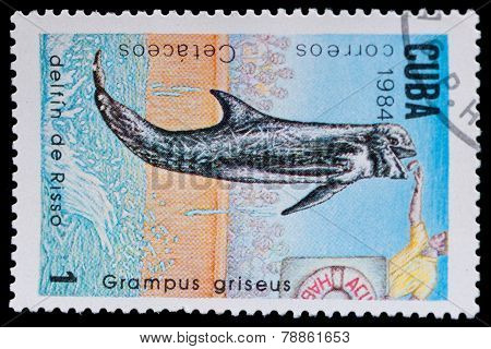 Stamp Shows Grampus Griseus