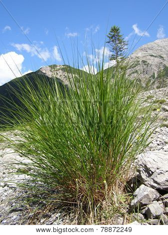 Grass growing on scree slope