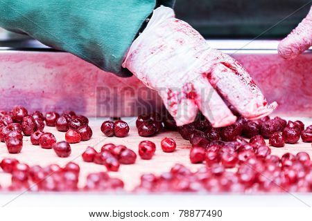 Sour Cherries In Processing Machines