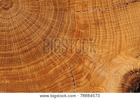 Oak Board With Growth Rings Close Up