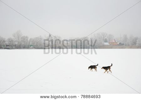 Two Black Stray Dogs In Snow-covered Field