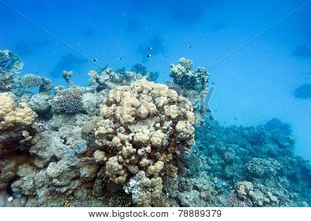 Coral Reef On The Bottom Of Tropical Sea, Underwater