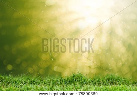 Field Of Green Grass In The Morning