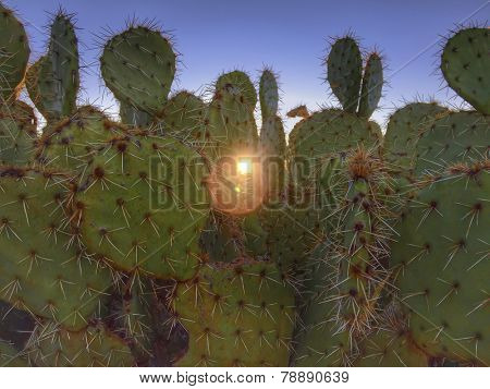 Prickly desert cactus with morning sunrise peaking through,