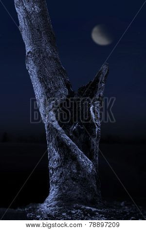 Oak Tree In Moonlight