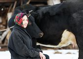 picture of milkmaid  - smiling country girl with  cow in winter - JPG