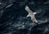 image of spread wings  - Seagull spread wings and flying above the sea.