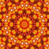 picture of stamen  - Pattern of Macro marigold red flower with yellow stamens - JPG