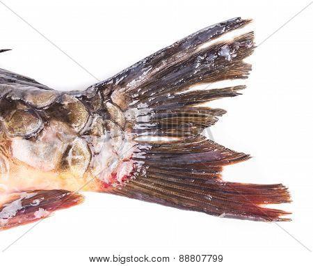 Closeup of carp fish tail.